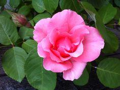 4 juin ... Il faut que basse une spéciale fleurs du jardin ! Superbe