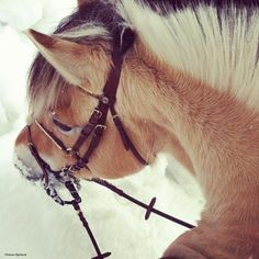 horses-are-the-angels-of-earth:    I think I'd rather fall in love with a horse than a human