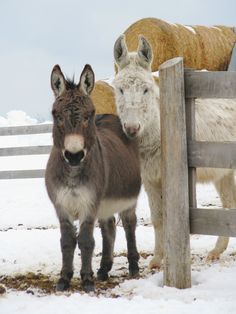 The The Donkey Sanctuary of Canada