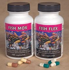 1000 images about fish antibiotics on pinterest fish for Where to buy fish mox