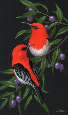 Pinturas a la venta. Pinturas a la venta. Exotic Birds, Colorful Birds, Pretty Birds, Beautiful Birds, Beautiful Pictures, Art En Ligne, Bird Illustration, Bird Drawings, Little Birds
