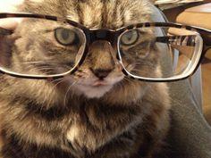 Librarian Cat.