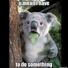 u mean I have to do something - Koala Cant Believe It