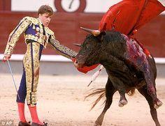 O animal sendo espetado até a morte, e sangrando de dor e de ódio ..