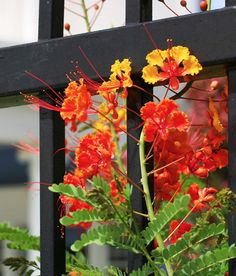 Vinyl fences add a beauty to your yard that is unmatched by other fences. They are not only a wonderful looking fence but also stand up to the harshest of weather conditions. If you are looking for an all around great fence, choose vinyl.