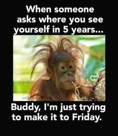 """My hairstyle today is called: """"I tried"""" funny jokes funny quotes humor funny pics fun quotes funny images fun pics jokes and fun Funny Animal Memes, Animal Quotes, Funny Animal Pictures, Funny Photos, Funny Animals, Funny Jokes, Hilarious, Funniest Memes, Funny Images"""