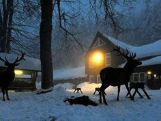 Winter im Schwarzwald – Berlin.de Snow, Horses, Animals, Outdoor, Equestrian Statue, Snow Mountain, Holy Spirit, Ski Trips, Winter Scenery