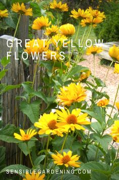 Great yellow flowers with Sensible Gardening. Collection of yellow flowers for choosing.