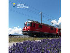 Rhätische Bahn bei Filisur mit Lavendelfeld im Vordergrund. (c) I. Drews