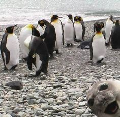 animal photo bombs!