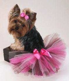 Quite the princess pooch