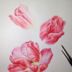 Adding another flower 😊 #wip #botanicalart #illustration #watercolor #watercolour #eunikenugroho