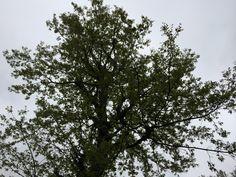 sky- tree