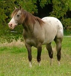 Mighty Luminous - Stallion Directory