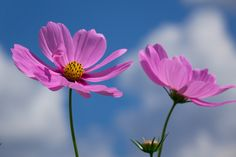 Photograph cosmos by Yoshiki Obata on 500px