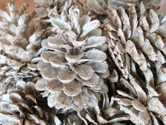 Bleached Pine Cones for Christmas or Wedding Decor!  I got this idea for Christmas Decor. I soaked pine cones in bleach and dried them in the oven and they came out awesome! I found a few how to links online. You can decorate them with different colors too. These would be awesome in a wedding or even a baby shower! :)