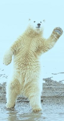 Dancing Bears Scientific Illustration In 2019