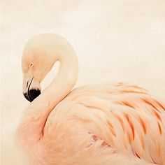 Pink Flamingo Fine Art Bird Photography Print Stylish Bedroom Living Room Wall Art Nursery Decor Animal Photograph Nature Decor. PRINT SIZE: Choose your size from the drop down menu. PRINTING: Photographs are printed on Kodak Endura Paper. Frame and mat shown are for illustrative purposes only and are not included. All photographs are unmatted and 11x14 and under are signed on the back with acid free archival ink. SHIPPING: All smaller prints are shipped in a rigid mailer via USPS. Please...