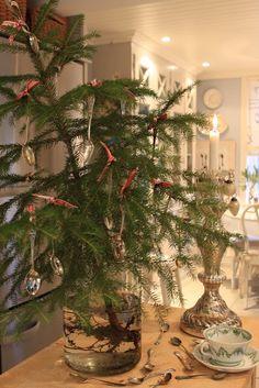 beribboned pine branch