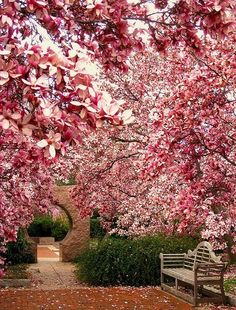 I want to plant some Magnolia or Tulip trees to get this kind of look!
