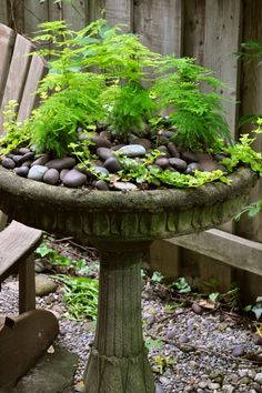 Gardening Container Hometalk :: 3 Beautiful Birdbath Planters - I love birdbath planters and have a couple in my garden. A birdbath planter brings small scales plants closer where you can really appreciate the subtle beauty… Bird Bath Planter, Bird Bath Garden, Self Watering Planter, Hanging Planters, Garden Planters, Fall Planters, Hanging Baskets, Container Plants, Container Gardening