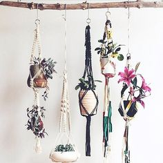 """""""I have more than one hanging pot plant in my house but I think I need many many more """""""