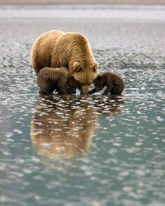 Bear With Her Cubs ~ Lake Clark National Park, Alaska.