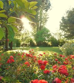 Jardín diseñado por Cristian Pizarro