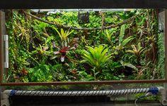 Tropical, Terrarium Plants, Reptile Enclosure, Vivarium, Tree Frogs, Habitats, Fresh Water, Scenery, Dart Frogs