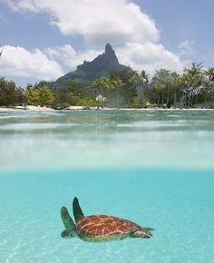 French Polynesia- Bora Bora