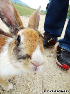 Japanese island overrun by rabbits, tourists Okunoshima Island offers cute and cuddly bunnies for mass enjoyment.