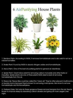 Natural air purifiers