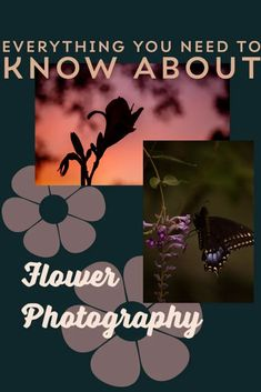 Beginner friendly photography tips from an experienced floral photographer on how to capture great flower photography. These digital photography tips will help you get better pictures of flowers. #beginnerphotographytips #digitalphotographytips #flowerphotographytips Wildlife Photography Tips, Aperture Photography, Floral Photography, Photography Gallery, Sunset Photography, Photography Business, Digital Photography, Photography Hacks, Photography Challenge