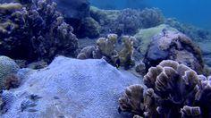 Buceando Bajo el Agua en el Tayrona, Colombia Paraísos Perdidos Ep