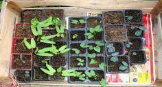 Guia de Produção para plantas Medicinais e Aromáticas