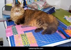 ❤ =^..^= ❤  Cats on Quilts Annie, helping with the cutting.