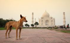 A dog in India