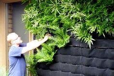 Como Montar Um Jardim Vertical Baratinho (11)