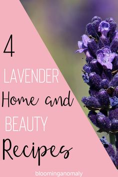 Are you growing a bunch of lavender and not sure what to do with it? Check out this mini recipe book with several home and beauty items you can make with lavender flowers and essential oil! Click on the pin for your own lavender recipe book. #lavenderplant #lavenderflowers #lavenderoil #lavenderrecipe Lavender Uses, Lavender Recipes, Lavender Flowers, Healing Herbs, Medicinal Herbs, Eye Gel, Growing Herbs, Garden Gifts, Beauty Recipe