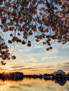 Make an escape to #Washington #DC this summer.