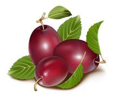 Fresh nectarine fruit Vector Download