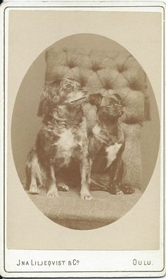 cdv of two dogs sitting on upholstered, tasseled chair. Photo by Jna Liljeqvist & Co. From bendale collection