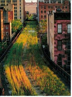 the ultimate community greenspace - The High Line, New York City. This is before all the renovation. very vintage