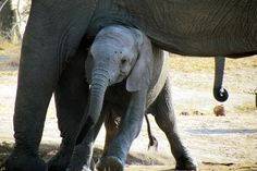 Seen at the waterhole in the Park, our special Ellie friends