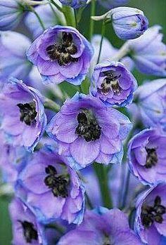 Solo Díos pudo crear estas hermosas flores y sus colores!!!