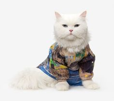 couture cats