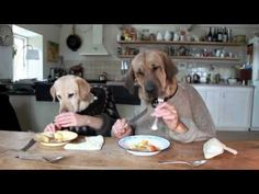 This is the funniest dog video!!!