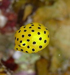 かわいい魚、熱帯魚 画像016