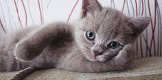 follow us, like and post feedback if this pet is lovable:) #cats #catsagram #catstagram #instagood #kitten #kitty #kittens #pets #animal  #petstagram #petsagram  #catsofinstagram #ilovemycat #instagramcats #catoftheday #lovecats #lovekittens #catlover #instacat  #dog #puppy #pup #dogsofinstagram #ilovemydog
