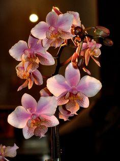 Kiermasz orchidei w BUW by JoanaKhaki, via Flickr